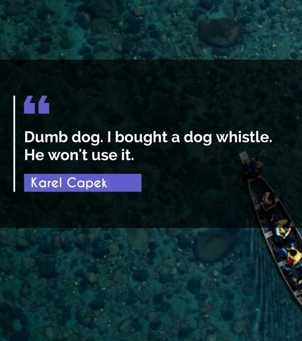 Dumb dog. I bought a dog whistle. He won't use it.
