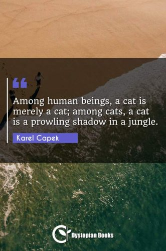 Among human beings, a cat is merely a cat; among cats, a cat is a prowling shadow in a jungle.